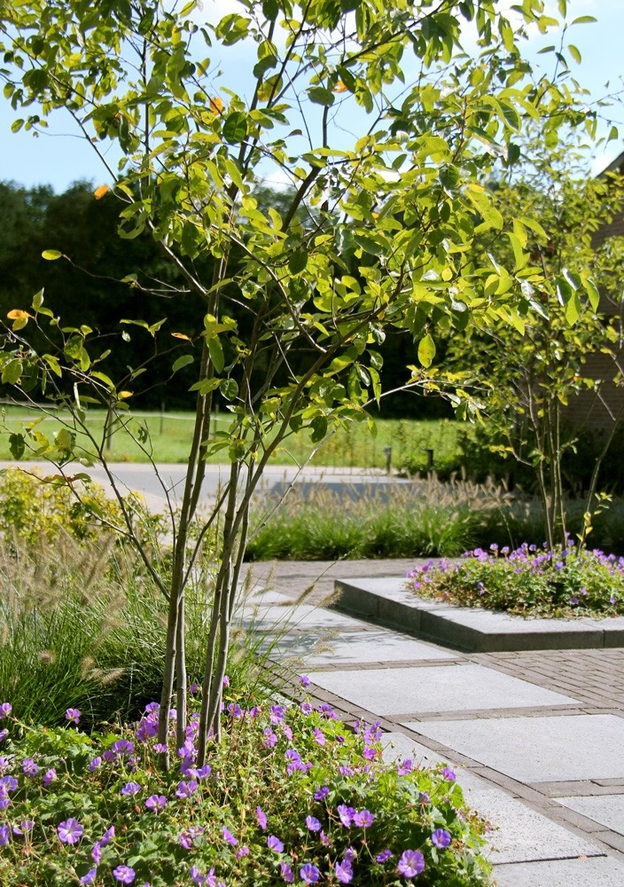 Tuin inspiratie, ideeën en voorbeelden - Langenhuizen Hoveniers